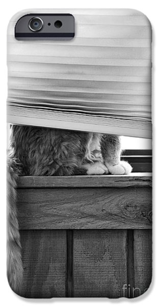 Ledge iPhone Cases - You Cant See Me iPhone Case by Karen Slagle
