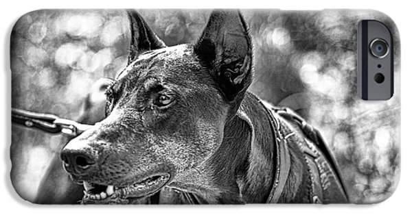 Doberman iPhone Cases - You Have About 15 Seconds V4 iPhone Case by Douglas Barnard