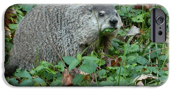 Groundhog Digital Art iPhone Cases - You Looking At Me? iPhone Case by Emmy Marie Vickers