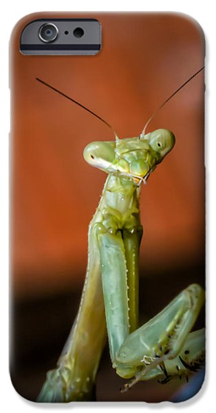 Mantodea iPhone Cases - You Looking at Me? iPhone Case by James Barber