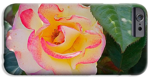 Interior Still Life iPhone Cases - You love the roses - so do I iPhone Case by Christine Till