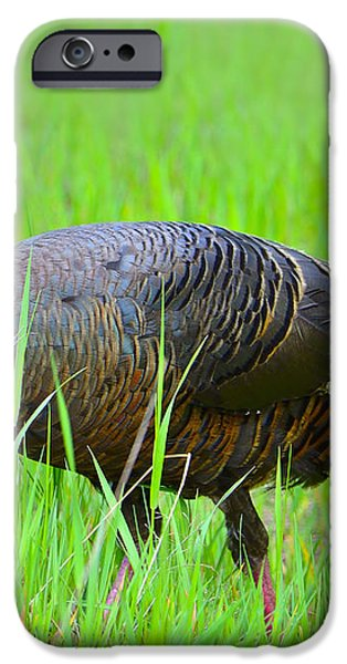 Young and Wild iPhone Case by Tony Beck