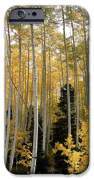 True Grit iPhone Cases - Young Aspens iPhone Case by Eric Glaser