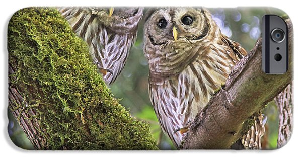 Barred Owl iPhone Cases - Young Barred Owlets  iPhone Case by Jennie Marie Schell