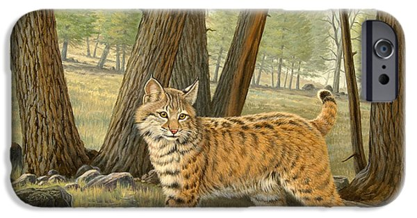 Bobcats iPhone Cases - Young Bobcat    iPhone Case by Paul Krapf