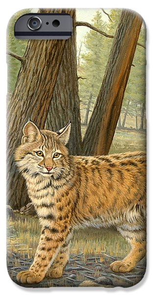 Young Bobcat    iPhone Case by Paul Krapf
