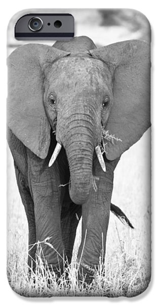 Tarangire iPhone Cases - Young Bull Elephant iPhone Case by Adam Romanowicz