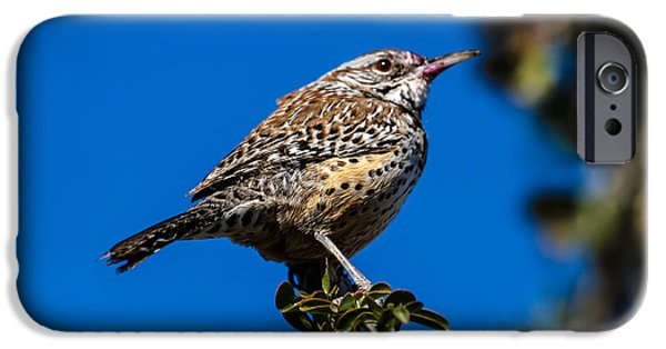 Haybale iPhone Cases - Young Cactus Wren iPhone Case by Robert Bales