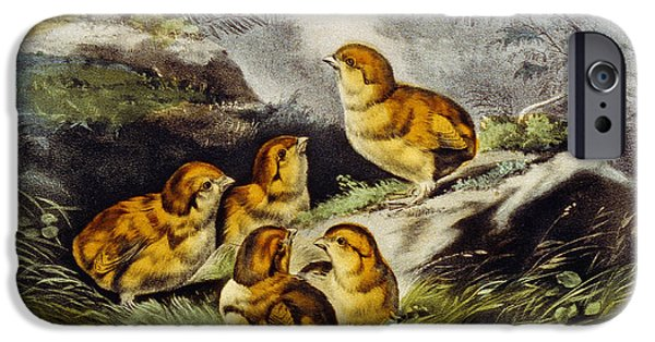 Soft Colour iPhone Cases - Young chicks circa 1856 iPhone Case by Aged Pixel