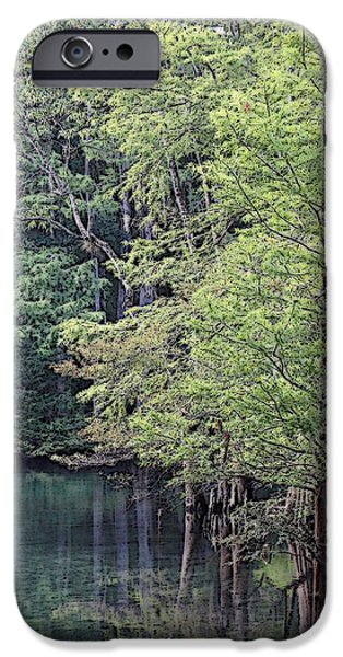 Chiefland iPhone Cases - Young Cypress 1 iPhone Case by Sheri McLeroy
