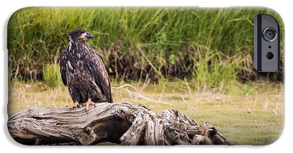 Patriotic Photographs iPhone Cases - Young Eagle on a River Bed iPhone Case by Andres Leon