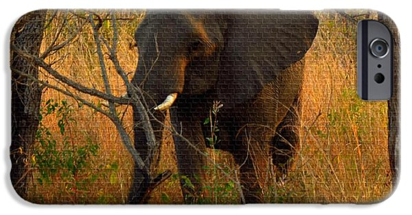 Abstract Digital Paintings iPhone Cases - Young Elephant  H b iPhone Case by Gert J Rheeders