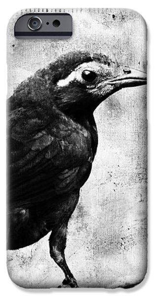 Young Grackle iPhone Case by Cassie Peters