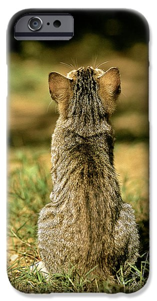Gray Hair iPhone Cases - Young House Cat iPhone Case by Christian Grzimek/Okapia