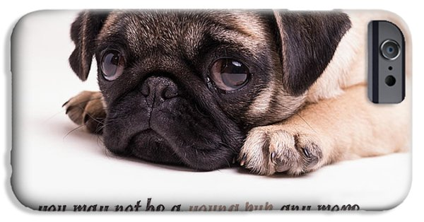 Cute Puppy Photographs iPhone Cases - Young Pup iPhone Case by Edward Fielding