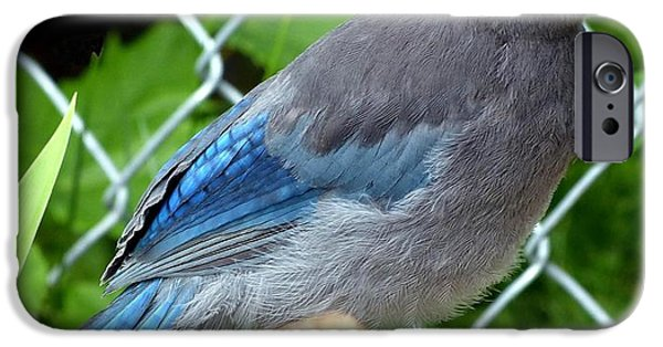 Stellar iPhone Cases - Young Stellar Jay iPhone Case by Will Borden