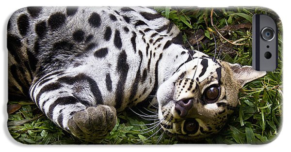 Biologic iPhone Cases - Young Wildcat iPhone Case by Heiko Koehrer-Wagner