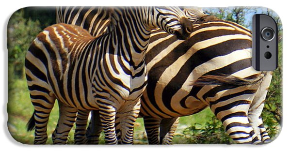 Stripes iPhone Cases - Young Zebra iPhone Case by Rachel Munoz Striggow