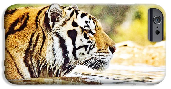 Mike The Tiger iPhone Cases - Youre Mine iPhone Case by Scott Pellegrin