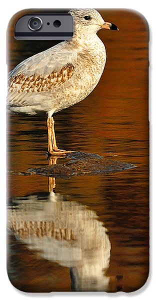 Youthful Reflections iPhone Case by Tony Beck