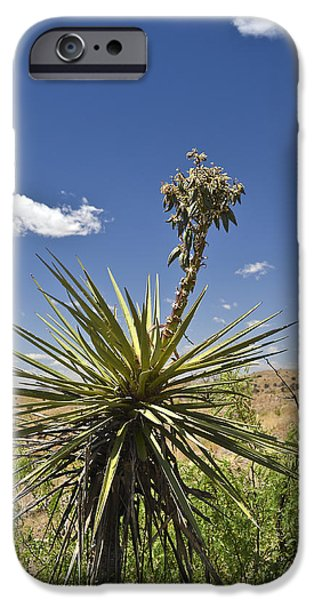 High Park Wildfire iPhone Cases - Yucca Fights Back iPhone Case by Allen Sheffield