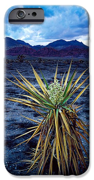 Red Rock iPhone Cases - Yucca Flower In Red Rock Canyon iPhone Case by Panoramic Images