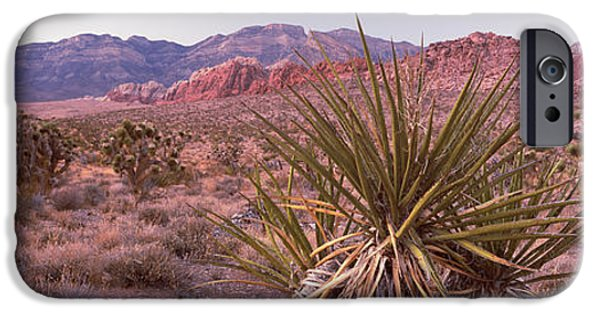 Red Rock iPhone Cases - Yucca Plant In A Desert, Red Rock iPhone Case by Panoramic Images