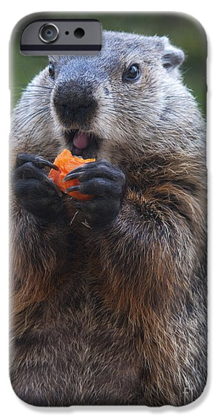 Groundhog iPhone Cases - Yum-Yum iPhone Case by Paul W Faust -  Impressions of Light