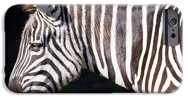 Harem Photographs iPhone Cases - Zebra 7D8908 iPhone Case by Wingsdomain Art and Photography