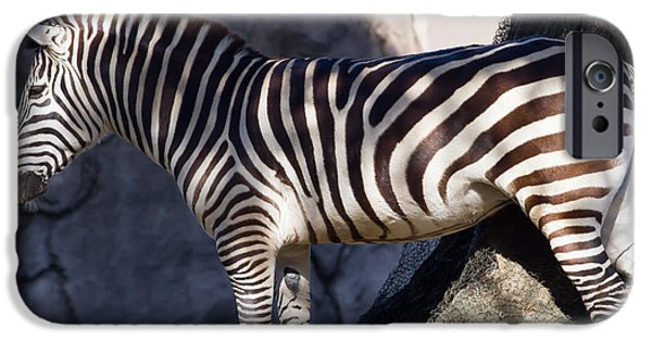 Harem Photographs iPhone Cases - Zebra 7D8945 iPhone Case by Wingsdomain Art and Photography