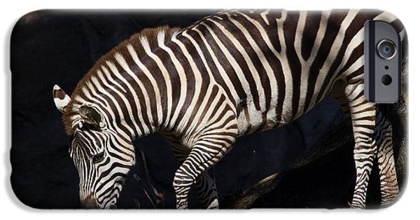 Harem Photographs iPhone Cases - Zebra 7D8949 iPhone Case by Wingsdomain Art and Photography