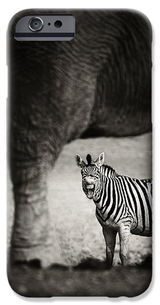 Mouth iPhone Cases - Zebra barking iPhone Case by Johan Swanepoel