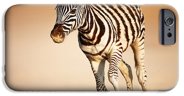 Reserve iPhone Cases - Zebra calf running iPhone Case by Johan Swanepoel