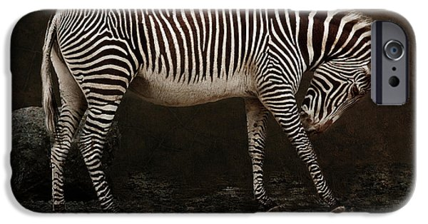 Stripes iPhone Cases - Zebra iPhone Case by Claudia Moeckel