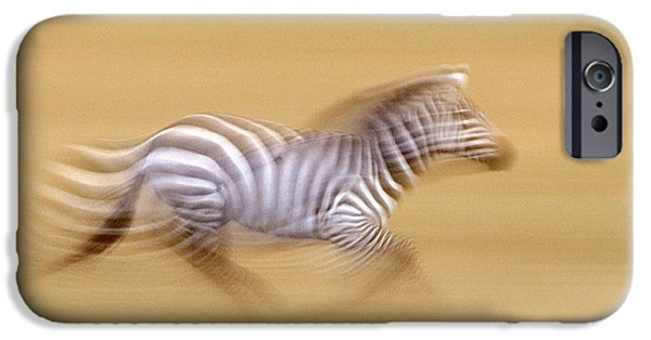 Quick iPhone Cases - Zebra In Motion Kenya Africa iPhone Case by Panoramic Images