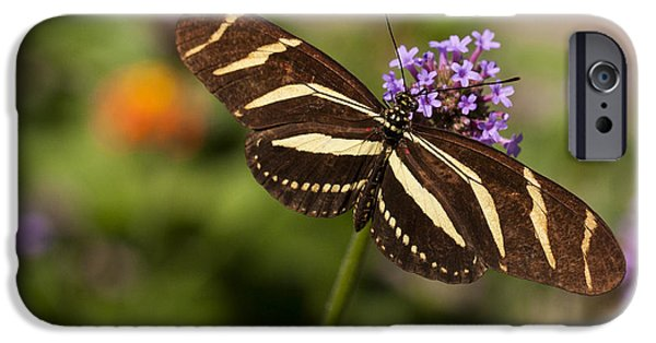 Close Up Floral iPhone Cases - Zebra Longwing Butterfly iPhone Case by Adam Romanowicz