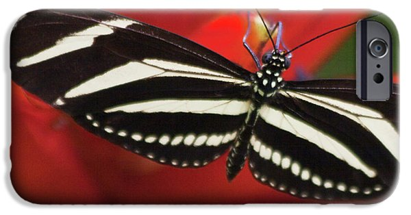 Biologic iPhone Cases - Zebra longwing butterfly iPhone Case by Heiko Koehrer-Wagner