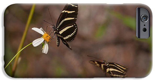 Biden iPhone Cases - Zebra Longwings iPhone Case by Paul Rebmann
