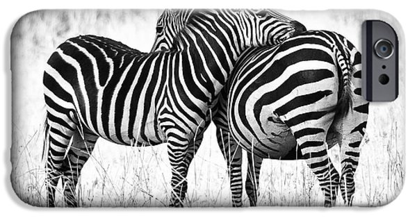 Wildlife iPhone Cases - Zebra Love iPhone Case by Adam Romanowicz