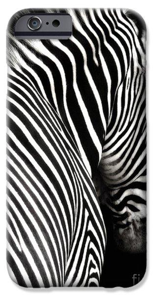 Zebra on Black iPhone Case by Elle Arden Walby