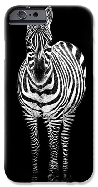 Zebra iPhone Cases - Zebra iPhone Case by Paul Neville