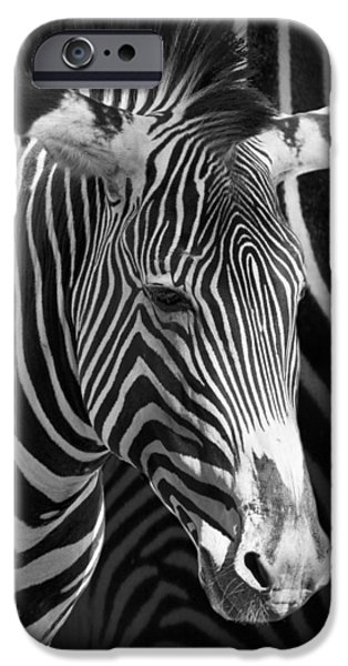 Zebra Prints iPhone Cases - Zebra Photograph with Zebra patterned Background iPhone Case by Randall Nyhof