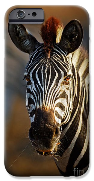 Shoulders iPhone Cases - Zebra close-up portrait iPhone Case by Johan Swanepoel