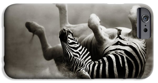 Morning iPhone Cases - Zebra rolling iPhone Case by Johan Swanepoel