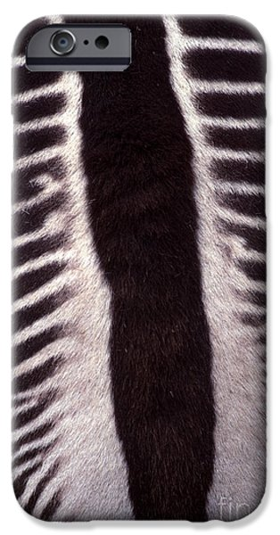 Zebra Stripes Closeup iPhone Case by Anna Lisa Yoder