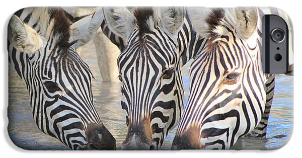 Freedom iPhone Cases - Zebra Thirsty Trio iPhone Case by Hermanus A Alberts