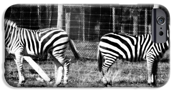 Ignored iPhone Cases - Zebras In Black And White iPhone Case by Dan Sproul