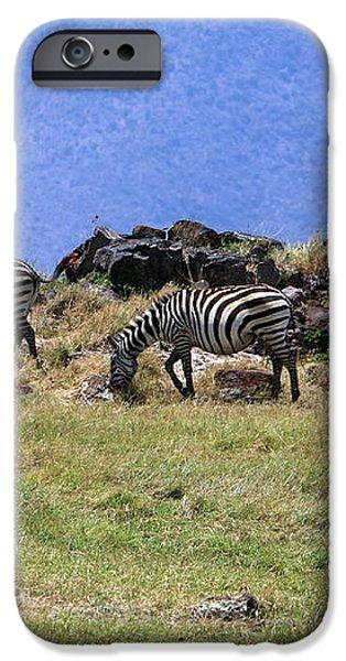 Zebras In The Ngorongoro Crater Tanzania iPhone Case by Aidan Moran