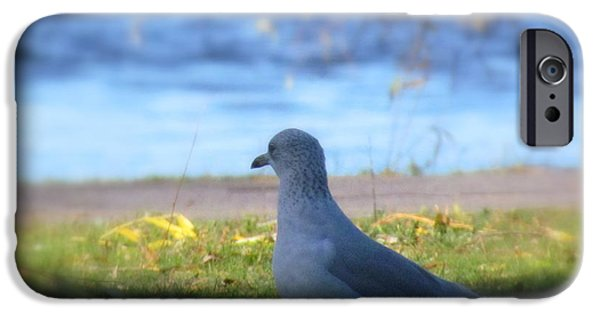 Abstract Digital Art iPhone Cases - Zen Seagull  iPhone Case by France Laliberte