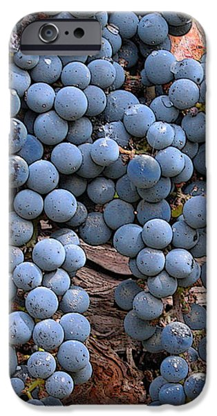 Zinfandel Wine Grapes iPhone Case by Charlette Miller